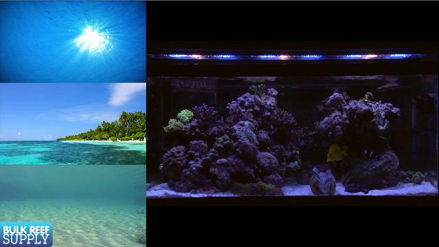 Aquarium Lighting: EP1 Lighting Your Reef Tank