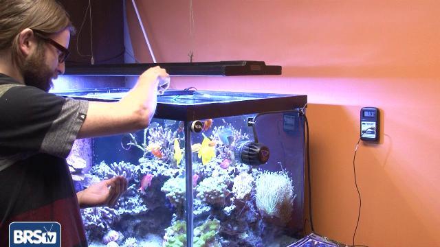 Aquarium Monitors & Controllers - EP 2: Testing, Monitors & Controllers