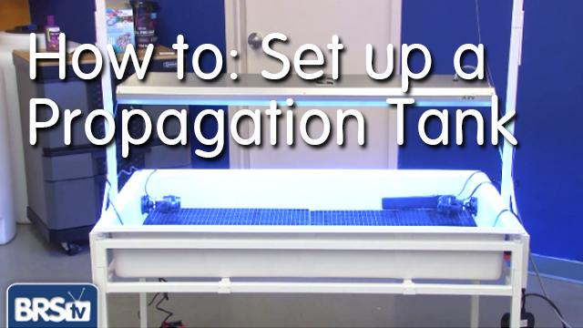 How to: Set up a Frag Tank for Polyps, Softies and Amenones - EP 2: Coral Propagation